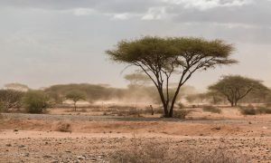 Sand storm in northern tanzania near the border with Kenya in Namnaga Arusha road.