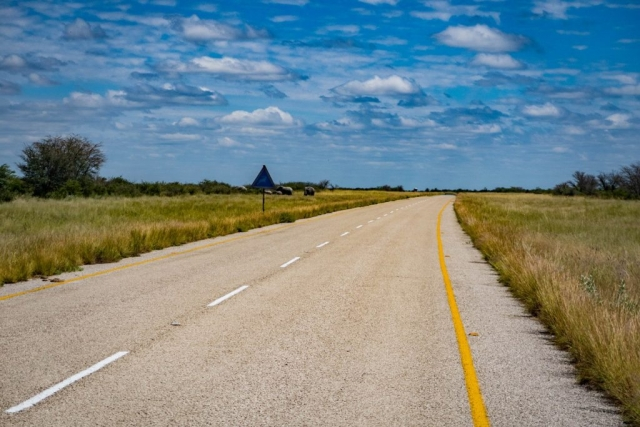 Cycling towards Maun in Botswana comming from Nata with elephants on the road.
